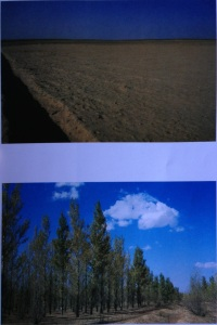 Gobi before and after afforestation